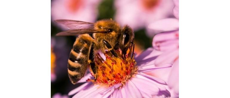 Trattamento con punture di api | Con competenza per la salute su iLive